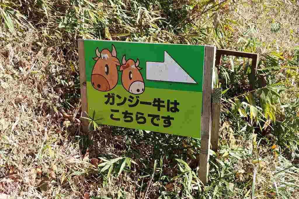 ガンジー牧場 ガンジー牛看板