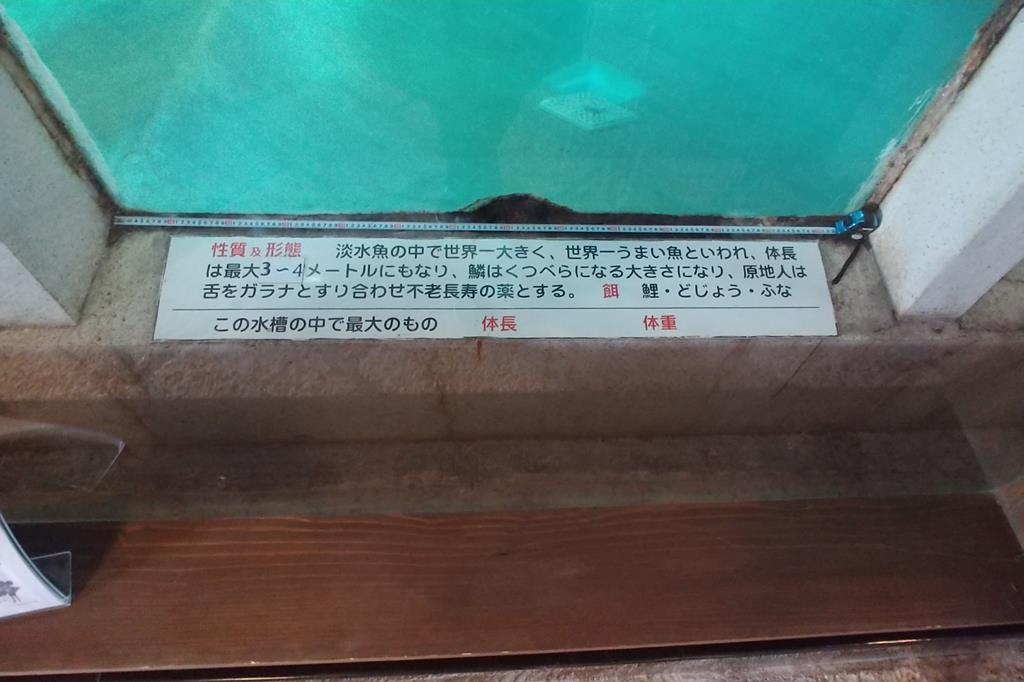 白池地獄 水族館5