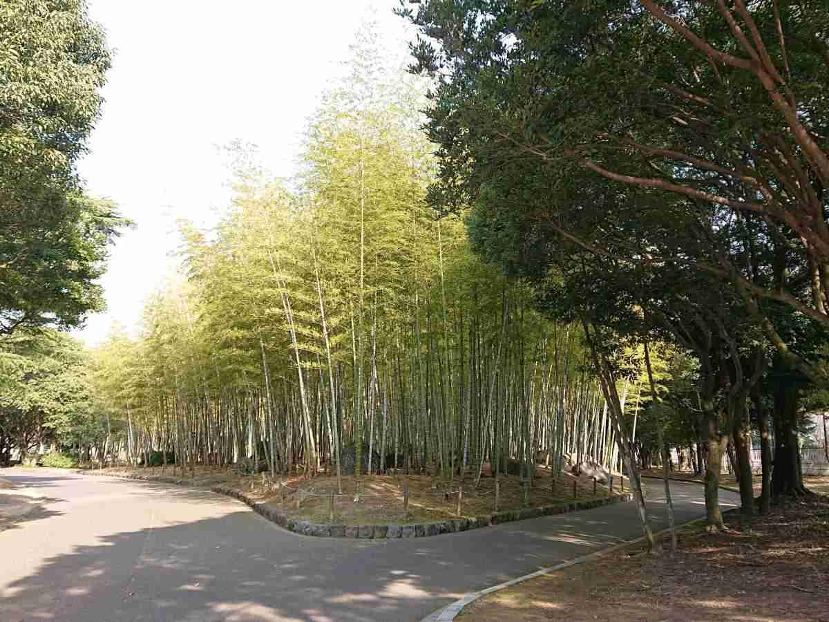 別府公園・竹林1