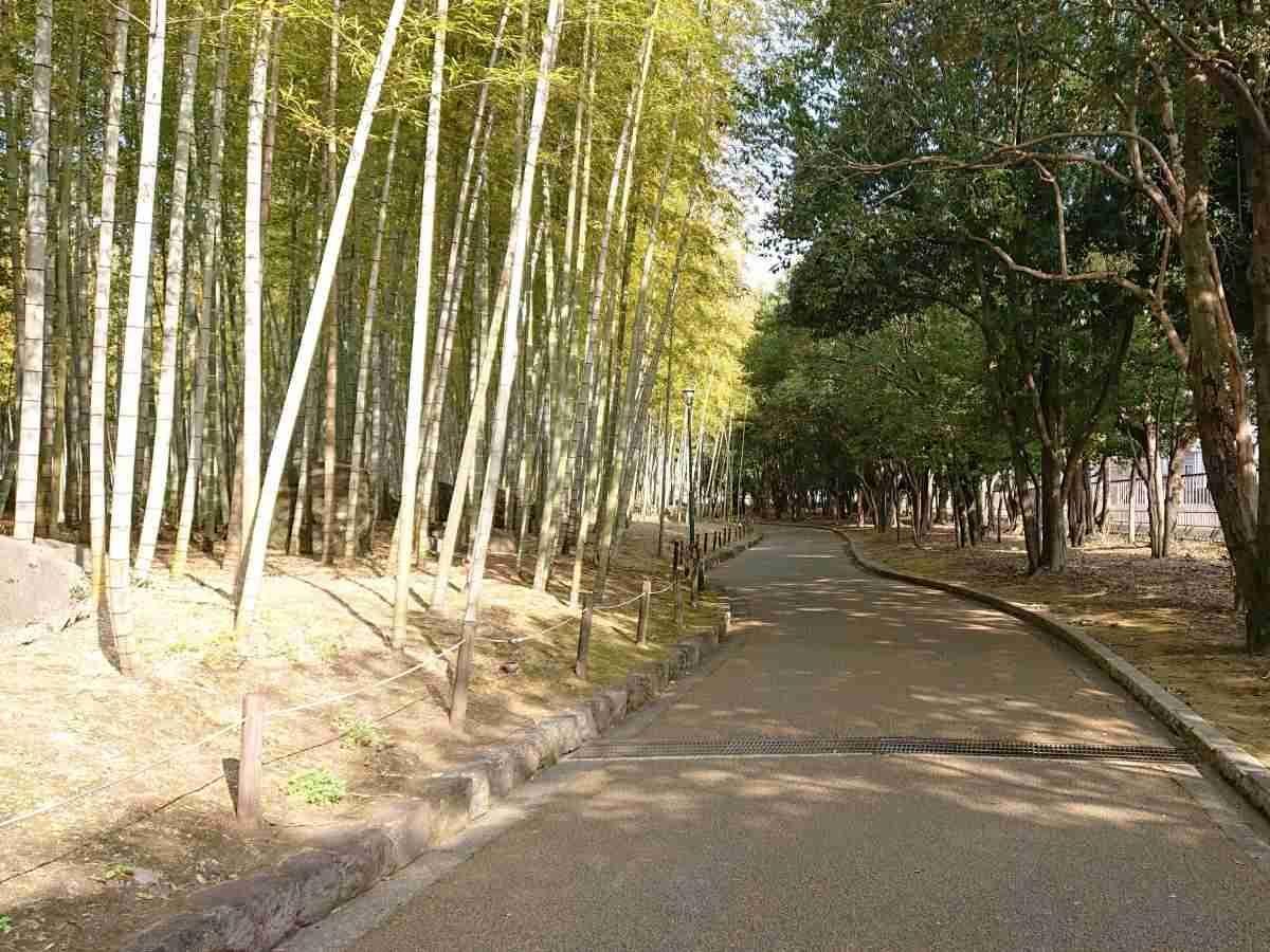 別府公園・竹林2