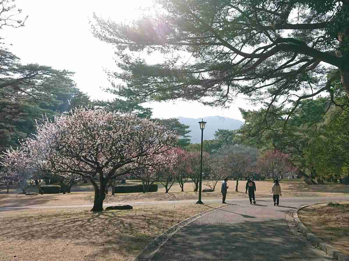 別府公園・梅の木2