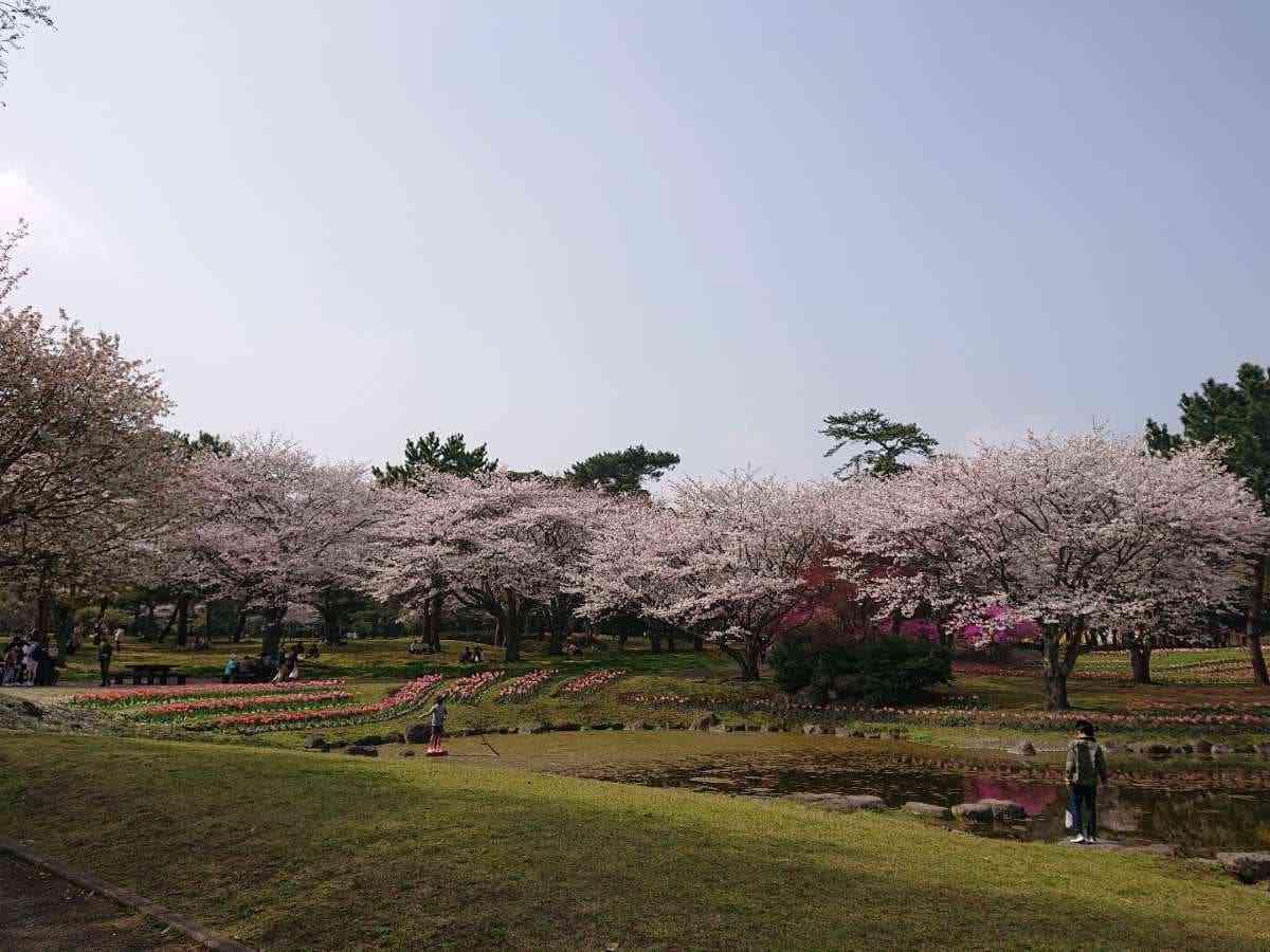 別府公園・桜満開