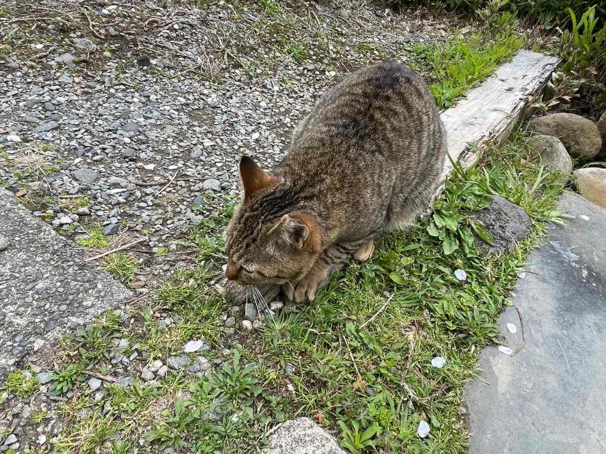ラムネ温泉館 猫