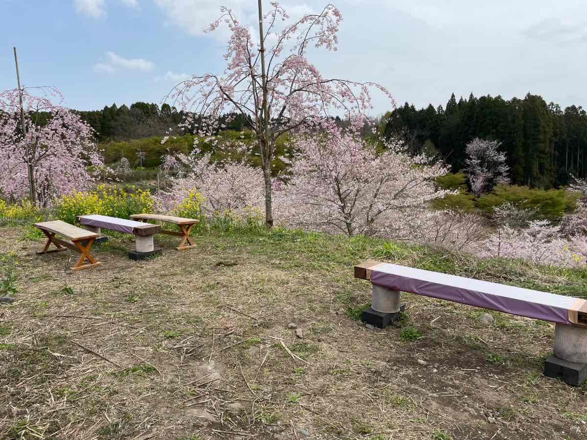 長湯温泉しだれ桜の里 ベンチとテーブル