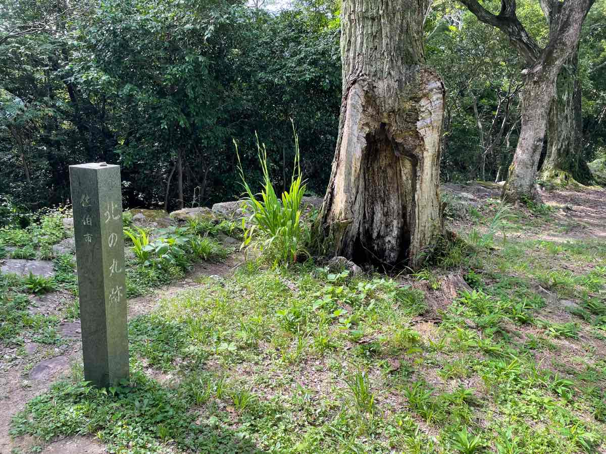 佐伯城跡 北の丸跡の木